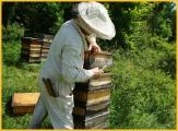 Traditionelle Bienenkästen