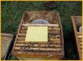 Varroahbehandlung mit Ameisensäure