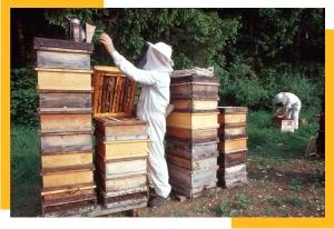 Honigsorten 2